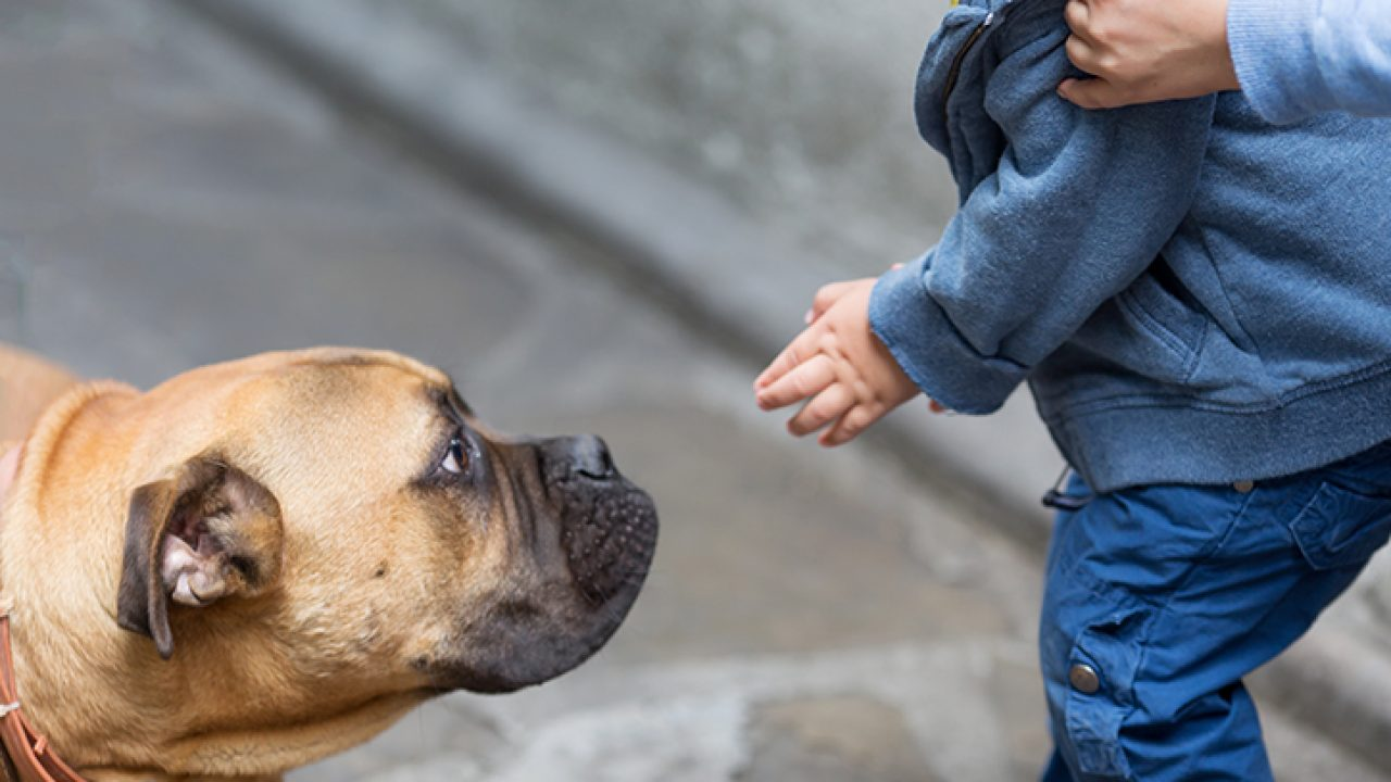 fear-of-dogs-how-to-overcome-cynophobia
